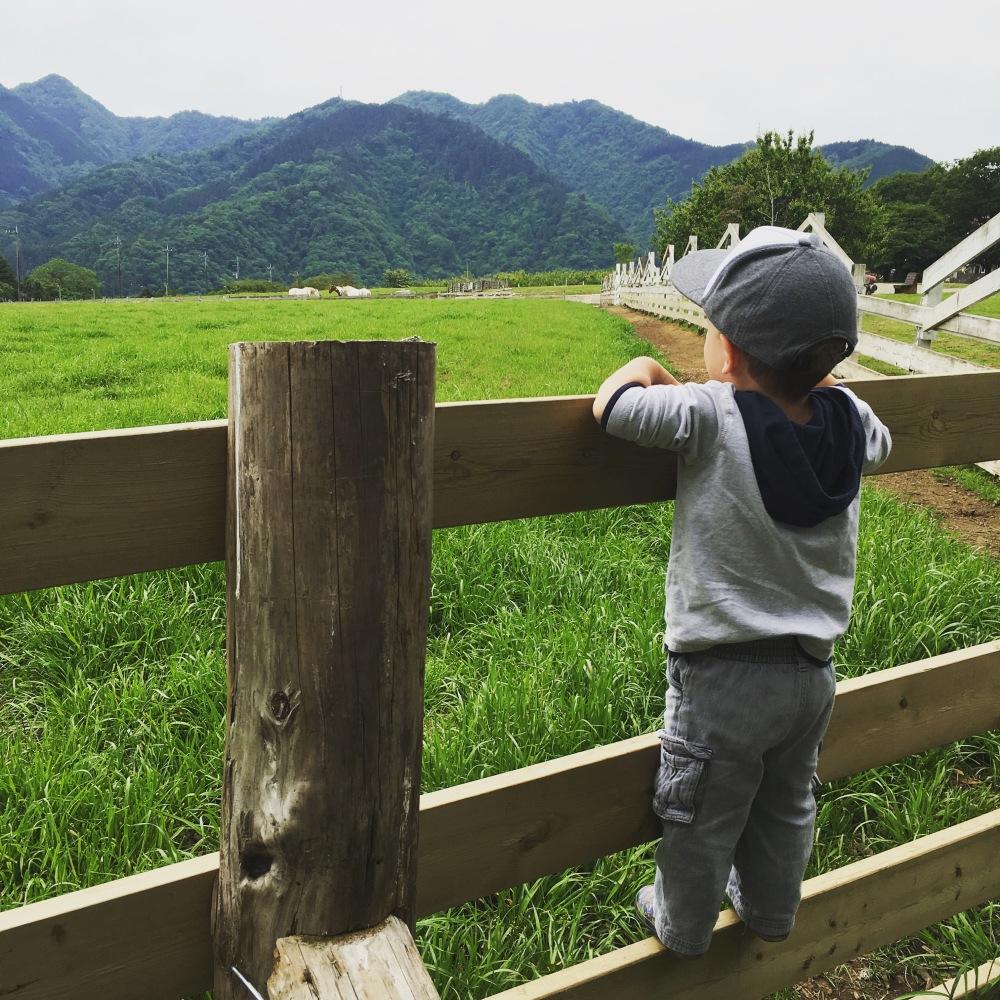 hattori farm in japan