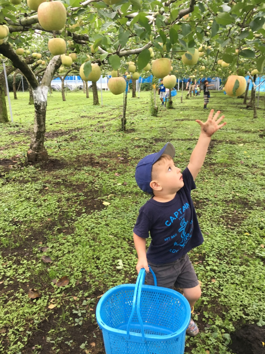 Fruit Picking in Japan