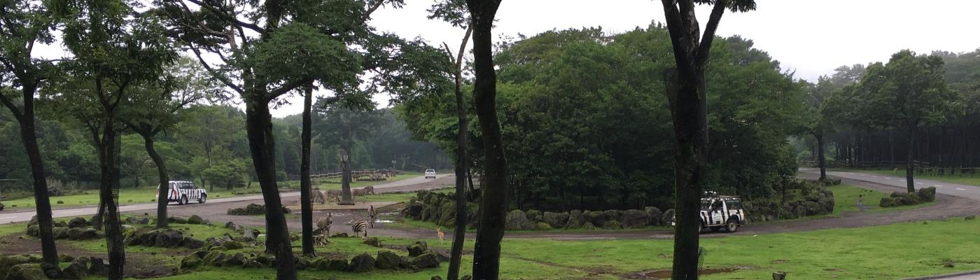 Safari Walking Trail