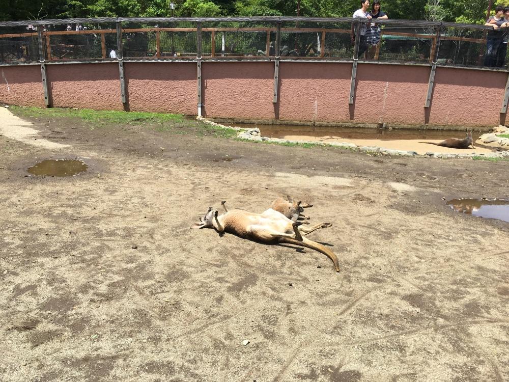 Fuji Safari Park 11