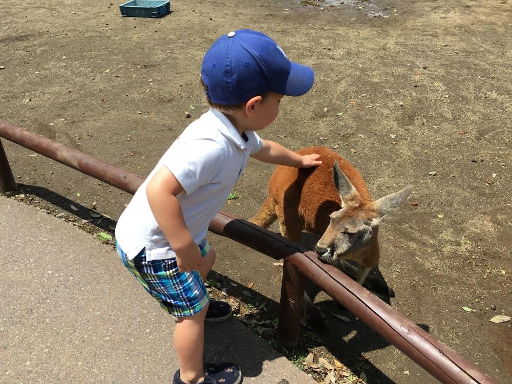 Fuji Safari Park 12