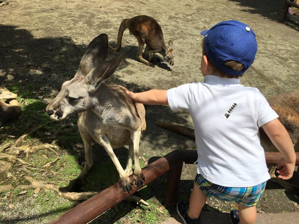 Petting Kangaroos