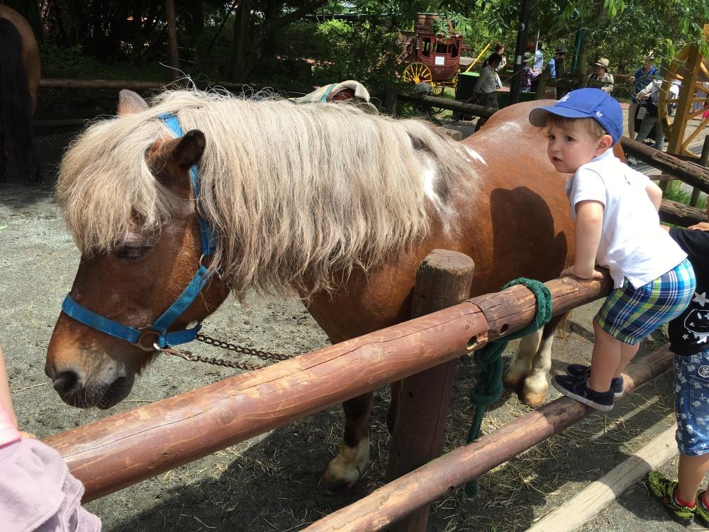 Fuji Safari Park 19