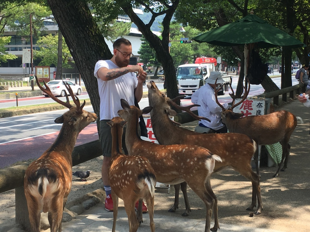 wild deer in Nara